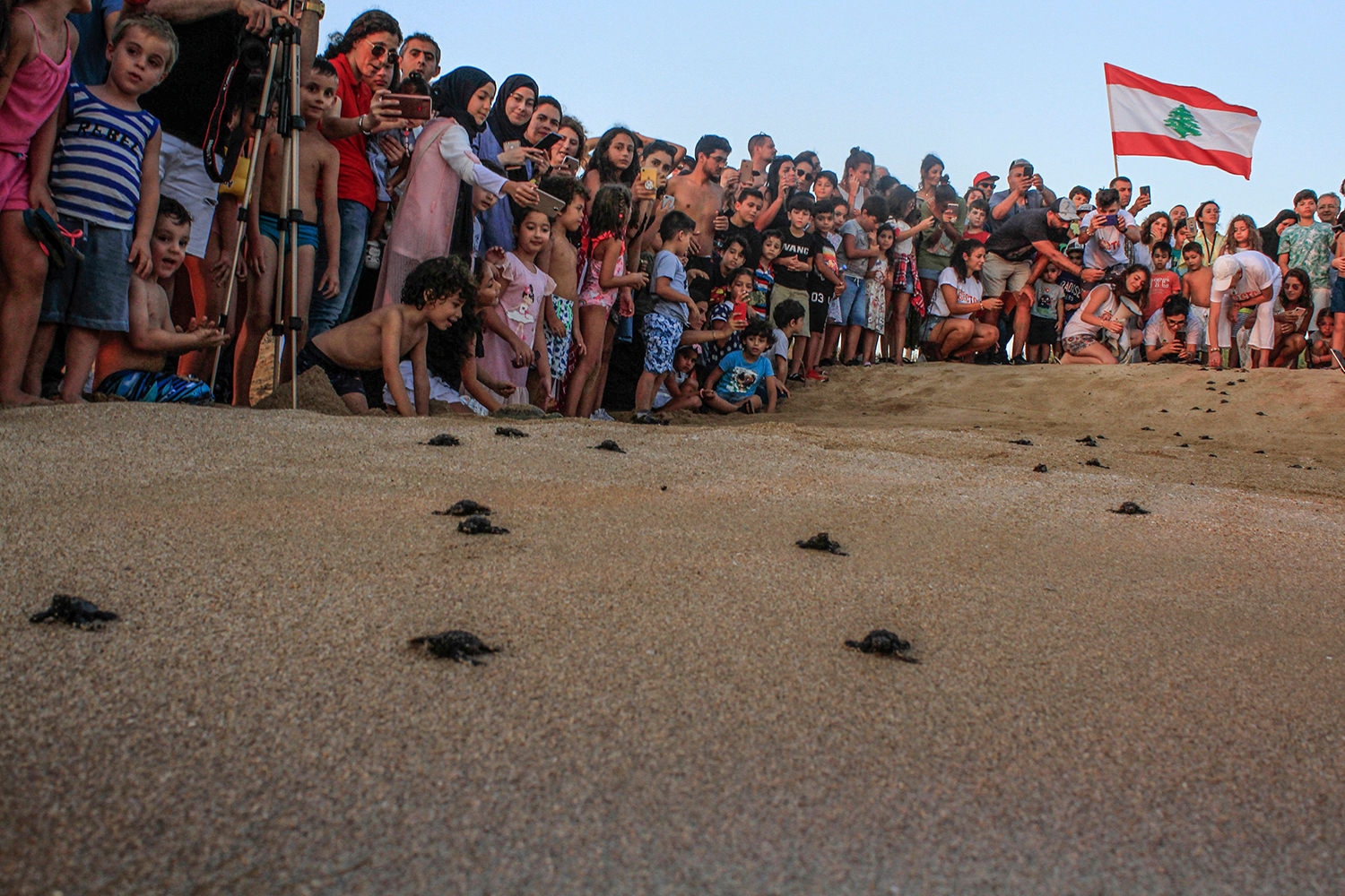 Lebanese beachgoers watch as small turtles crawl on the sandy beach of al-Mansouri near Lebanon's southern city of Tyre on July 31. MAHMOUD ZAYYAT/AFP/Getty Images