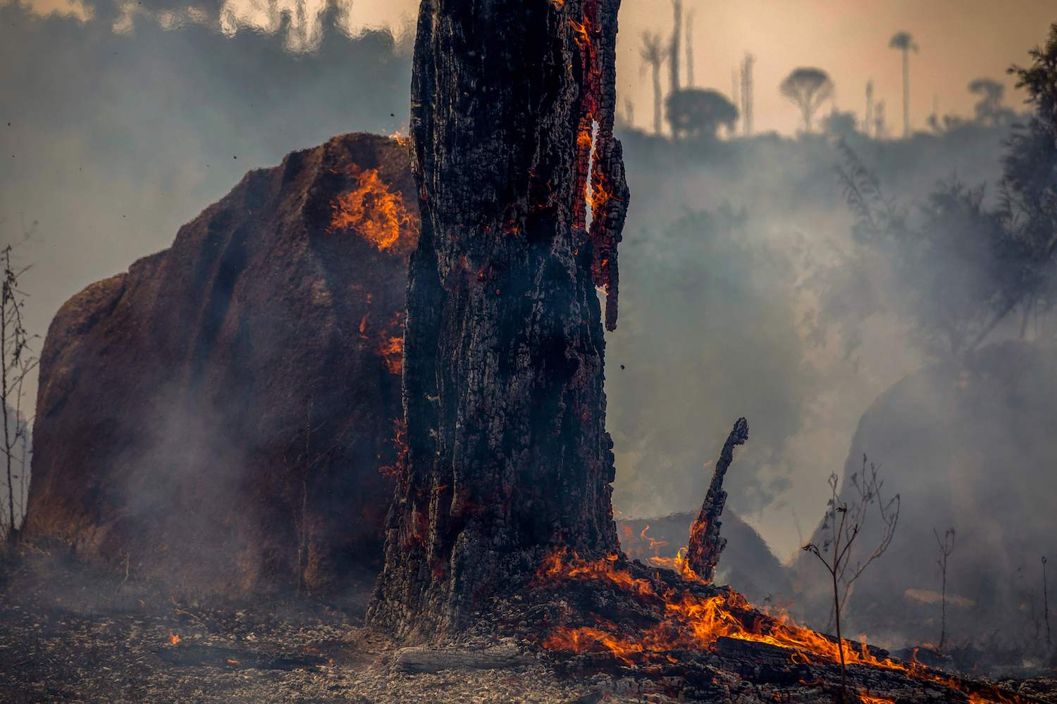 Around the World, Forests Are on Fire – Foreign Policy