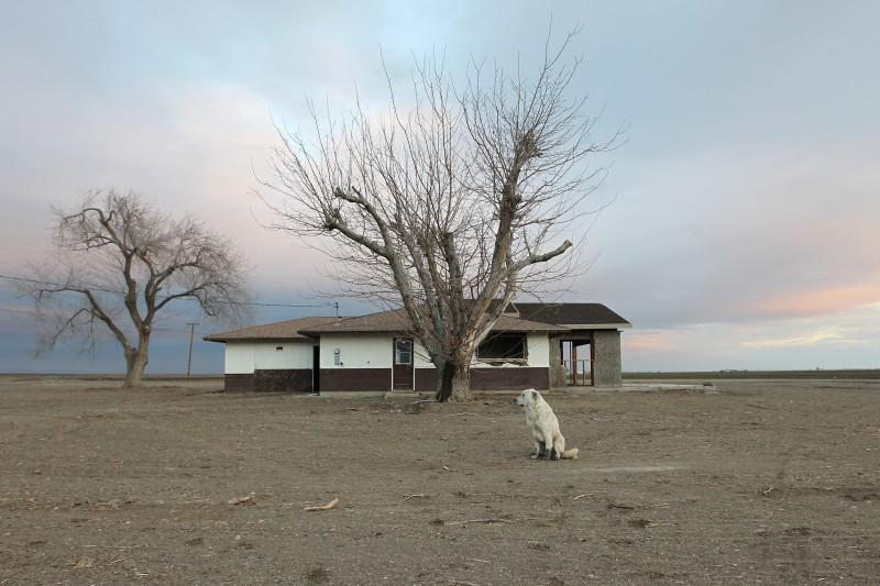 A dog hangs around an abandoned farmhouse on February 6, 2014 near Bakersfield, California.