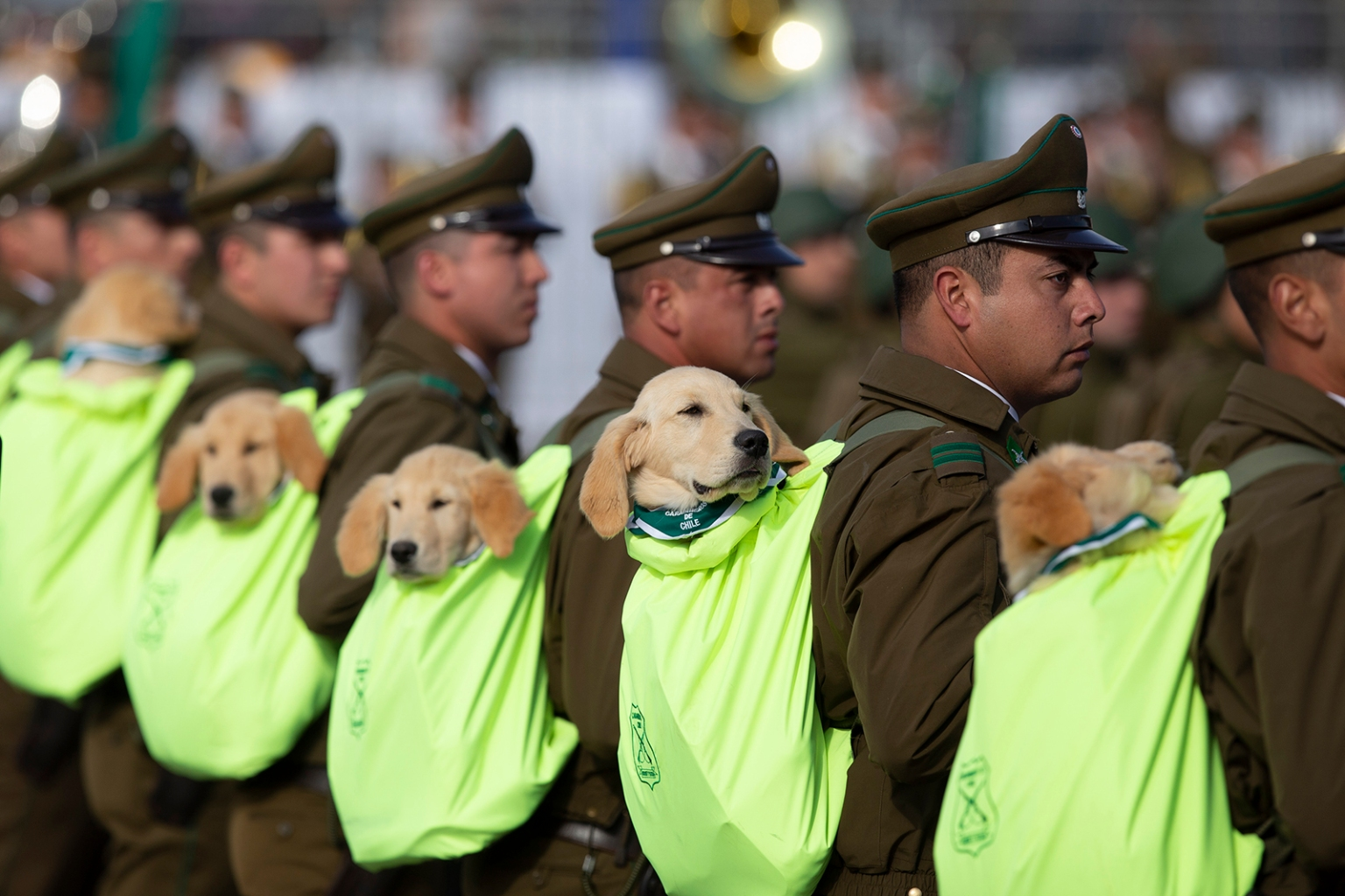 Carabineros police officers march with their sniffer dogs during a military parade in Santiago marking the 209th anniversary of Chile's independence on Sept. 19. CLAUDIO REYES/AFP/Getty Images