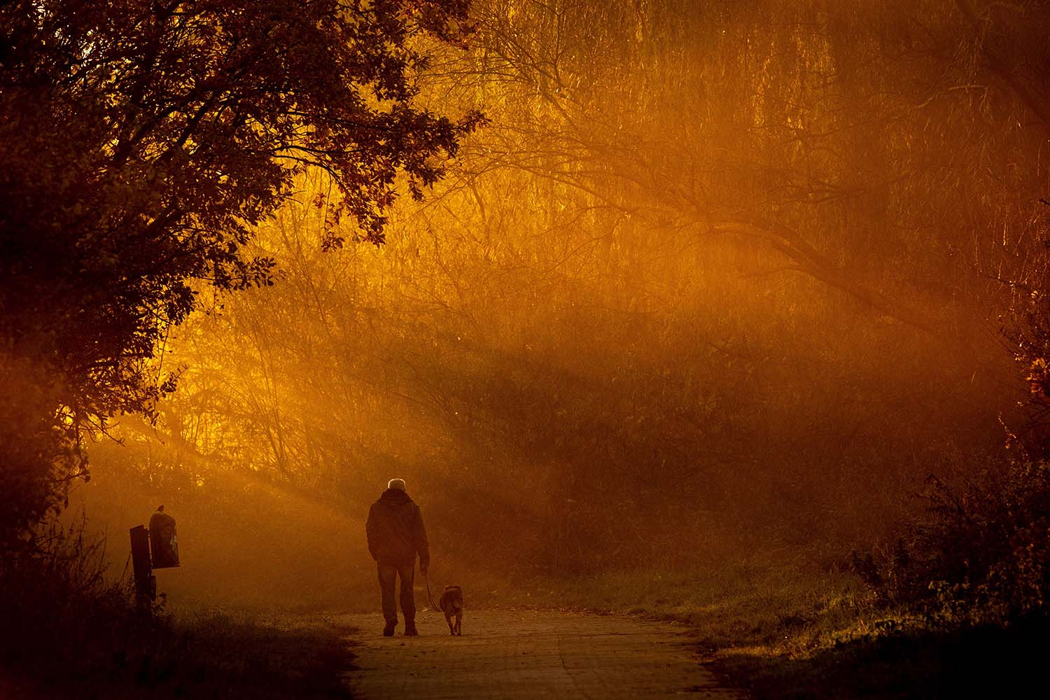 A man walks his dog as sun rises in Hanover, northern Germany, on Nov. 14. PETER STEFFEN/dpa/AFP via Getty Images