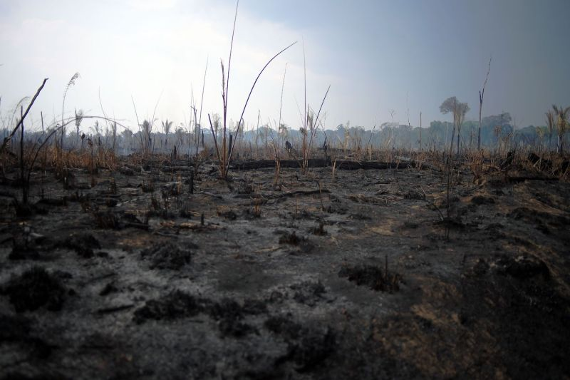 A burnt area of the Amazon rainforest in Brazil.