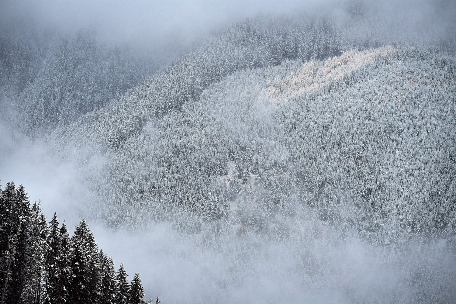 Snow covers fir trees at Valea Rea (on Fagaras mountains near Nucsoara, central Romania, on Oct. 31. DANIEL MIHAILESCU/AFP via Getty Images