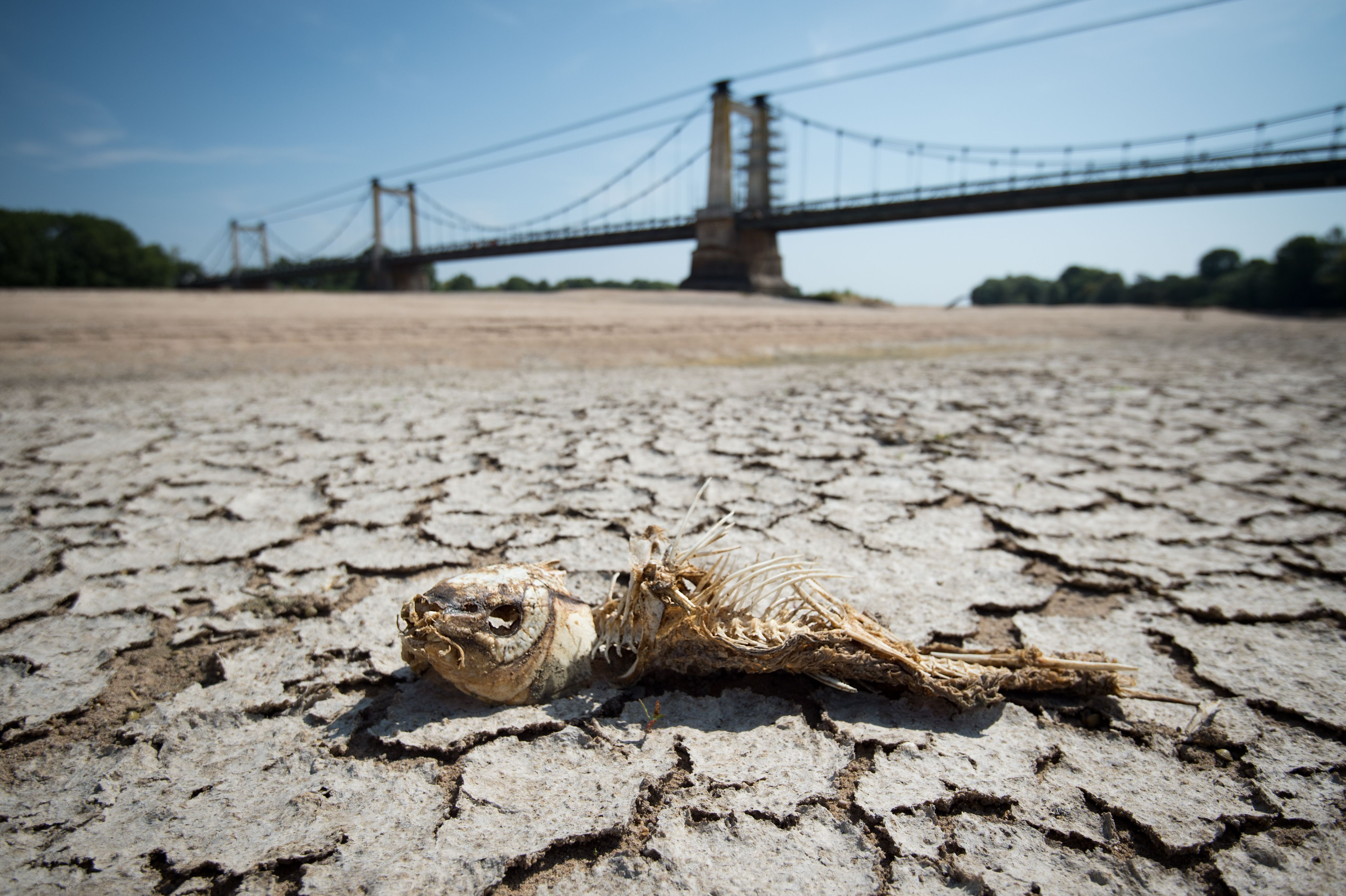 A fishbone lies on a dry part of the bed of the River Loire in western France on July 24, 2019, as drought conditions prevail over much of western Europe.
