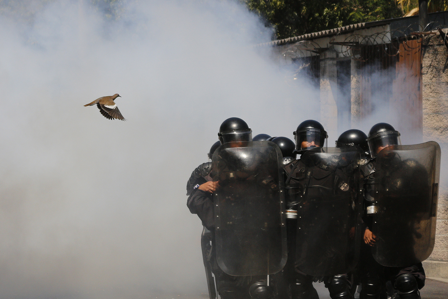 EL SALVADOR | A bird flies near riot police during a protest against an effort by El Salvador's National Congress to put the water service in the hands of the private sector in San Salvador on March 20. Alex Peña/Getty Images