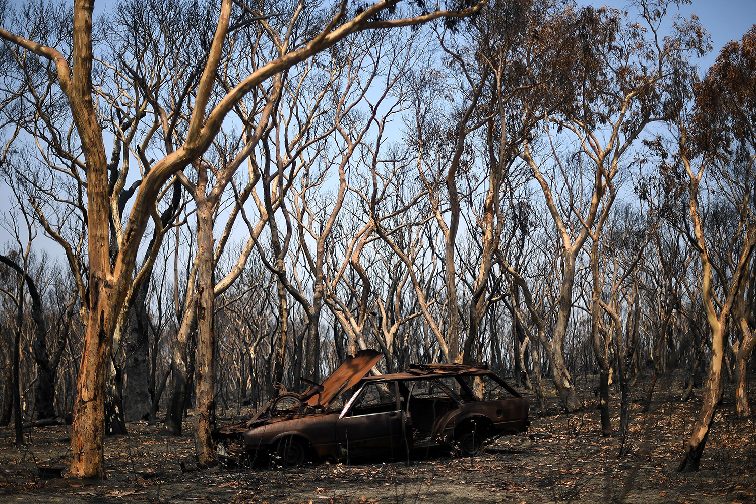 A destroyed car is seen among charred trees in Lithgow, in Australia's New South Wales, on Jan. 11. SAEED KHAN/AFP via Getty Images