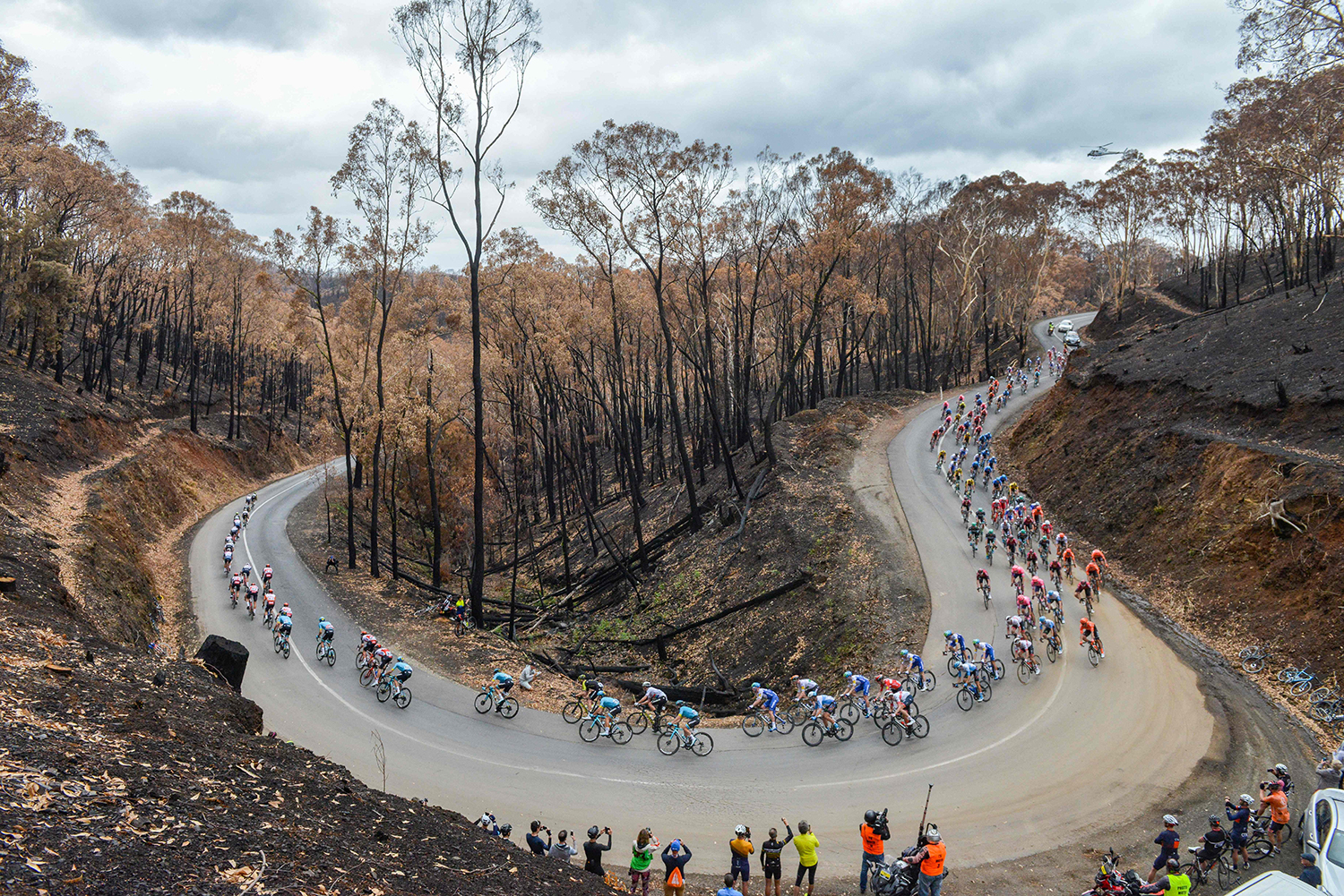 Cyclists ride through fire-ravaged Fox Creek Road near Cudlee Creek during Stage 3 of the Tour Down Under UCI World Tour cycling event through the Adelaide Hills, South Australia, on Jan. 23.  BRENTON EDWARDS/AFP via Getty Images