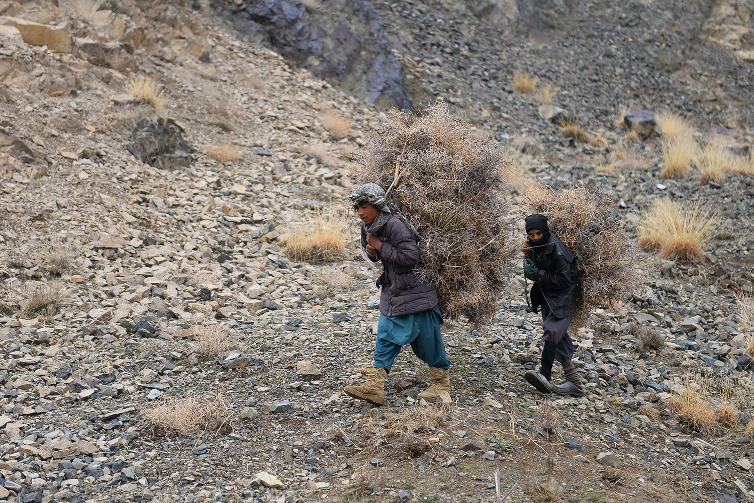 Youths carry firewood along a hillside on the outskirts of Herat, Afghanistan, on Jan. 20. HOSHANG HASHIMI/AFP via Getty Images