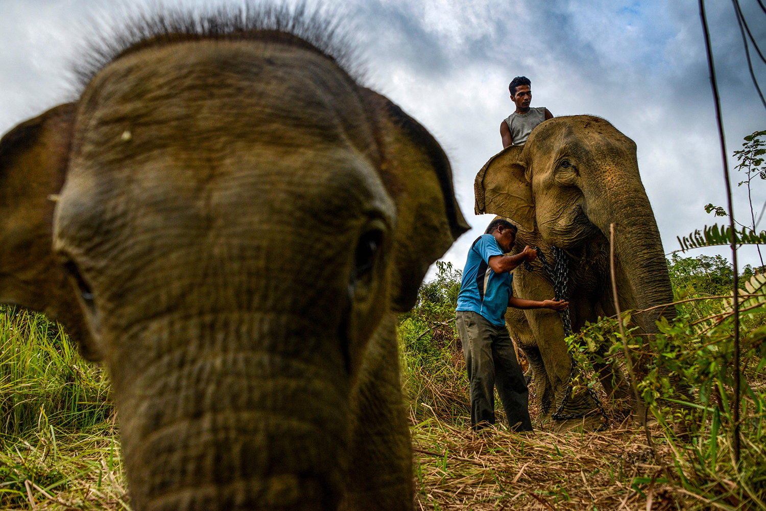 A mahout arranges the chain of a Sumatran elephant as a 6-month-old elephant walks past at the Alue Kuyun Conservation Response Unit in Meulaboh of Aceh province, Indonesia, on Feb. 8. CHAIDEER MAHYUDDIN/AFP via Getty Images