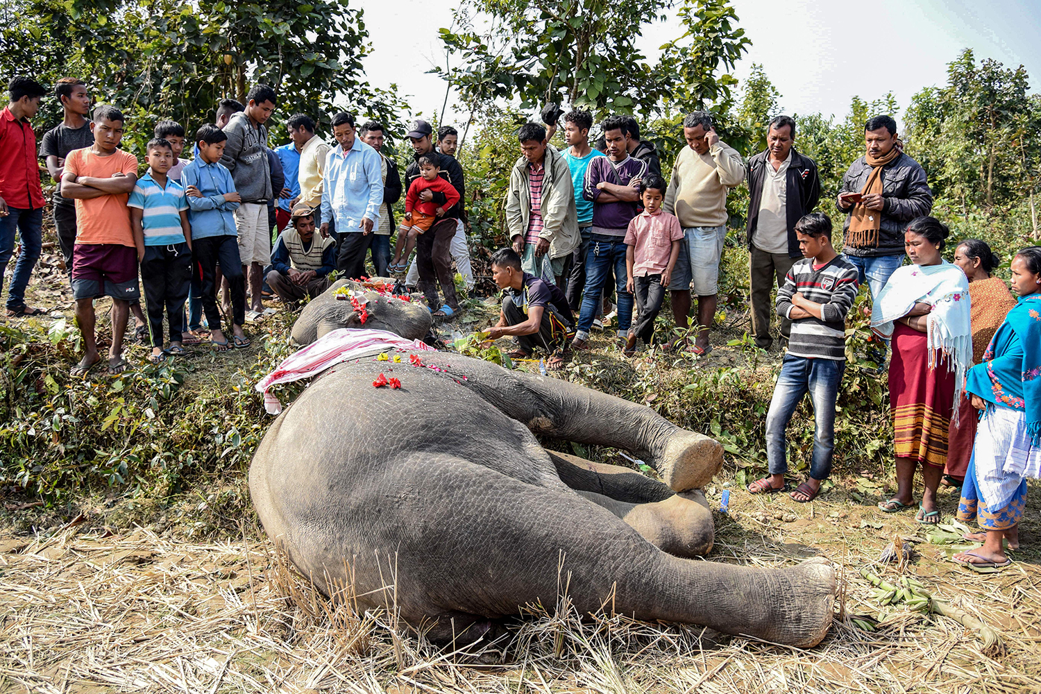 Villagers and forestry workers place flowers on the body of a wild elephant near Bondapara Reserve Forest in India's northeastern state of Assam on Feb. 6. KULENDU KALITA/AFP via Getty Images