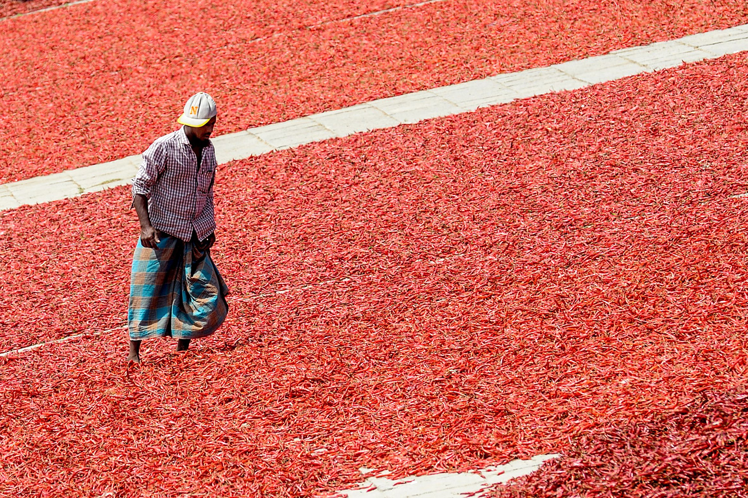A worker stands among chilis left to dry near an embankment of Jamuna River in Bogra, Bangladesh, on March 17. MUNIR UZ ZAMAN/AFP via Getty Images
