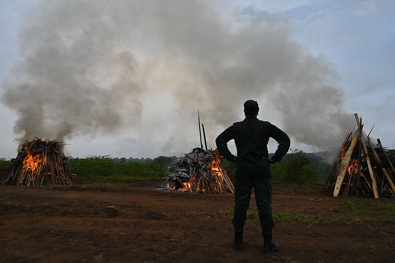 An officer of the Ivory Coast's water and forests ministry watches as bags of pangolin scales seized from poachers in 2017 and 2018 are burned March 3 in the suburb of Abidjan. The pangolin, a delicacy across southeast Asia, is the most trafficked mammal in the world. Beijing announced a total ban on the sale and consumption of the pangolin after the coronavirus outbreak. ISSOUF SANOGO/AFP via Getty Images
