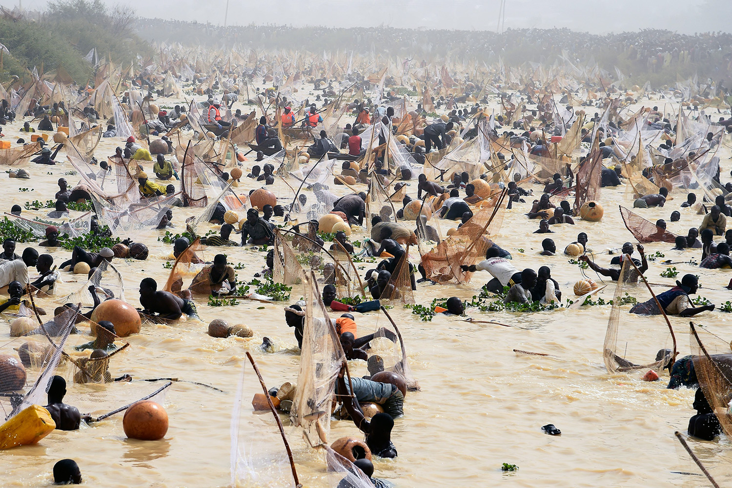 Nigerians try to catch fish during the final day of the Argungu Fishing Festival in Kebbi state, northwest Nigeria, on March 14. PIUS UTOMI EKPEI/AFP via Getty Images