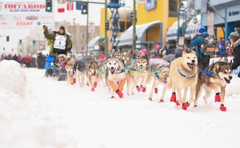 Fabio Berlusconi participates in the Iditarod