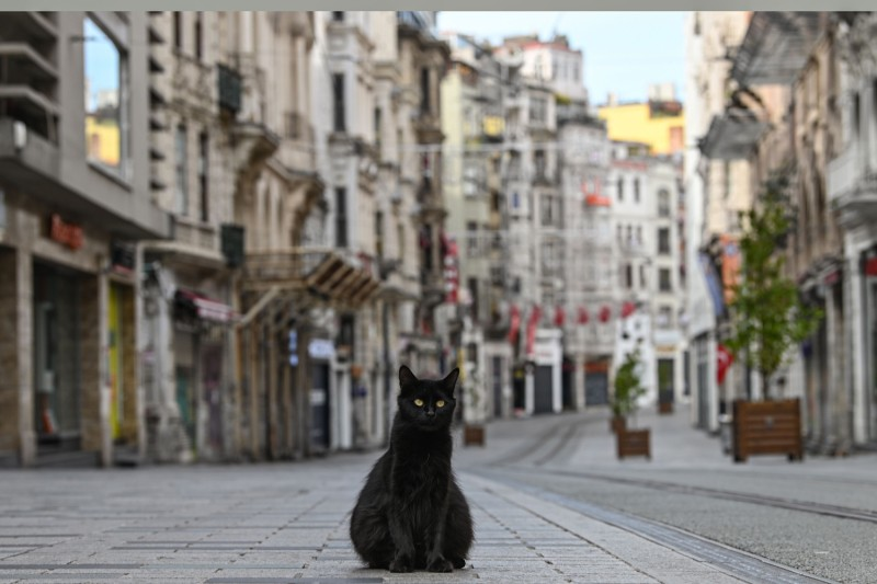 A stray cat on an empty Istiklal Caddesi, the main shopping center of Istanbul, on April 19, as the Turkish government announced a two-day curfew to prevent the spread of COVID-19.