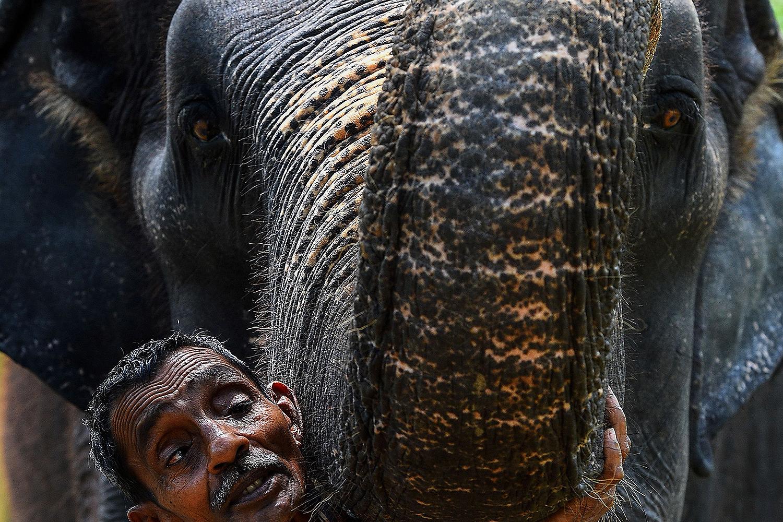 A mahout stands next to the trunk of an elephant in Pinnawala, Sri Lanka, on April 15. ISHARA S. KODIKARA/AFP via Getty Images