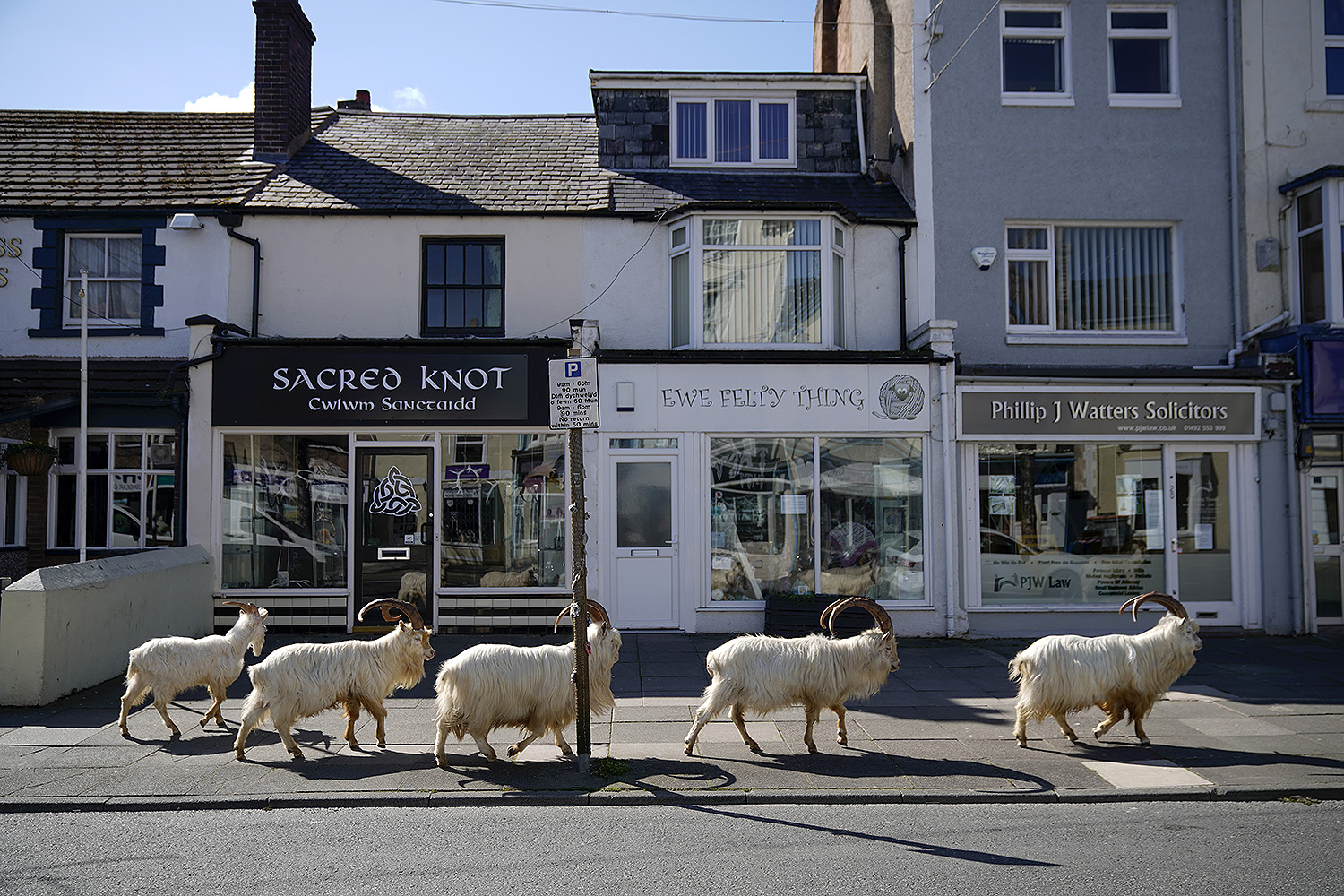 Mountain goats roam the deserted streets of Llandudno, Wales, on March 31. The goats normally live on the rocky Great Orme headland, but the herd was drawn to the town by the lack of people and tourists during quarantine measures. Christopher Furlong/Getty Images