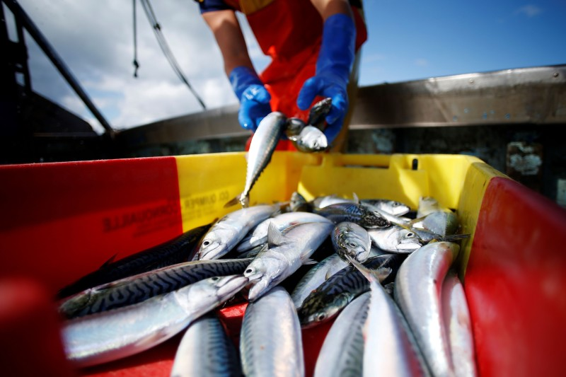 A French fisherman sorts through a mackerel catch on board a trawler off the coast of Ouistreham, France, on July 31, 2018.
