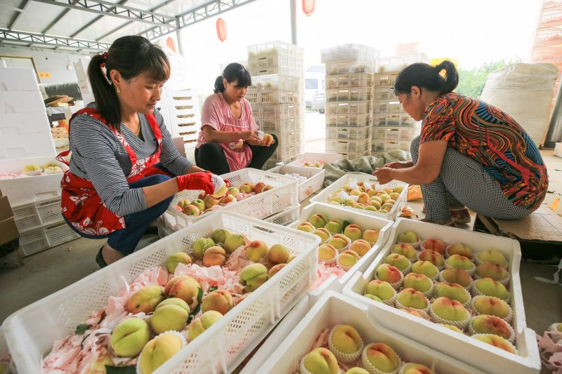 Chinese farmers put peaches in boxes to sell in Lianyungang, in China's Jiangsu province, on June 29, 2017.