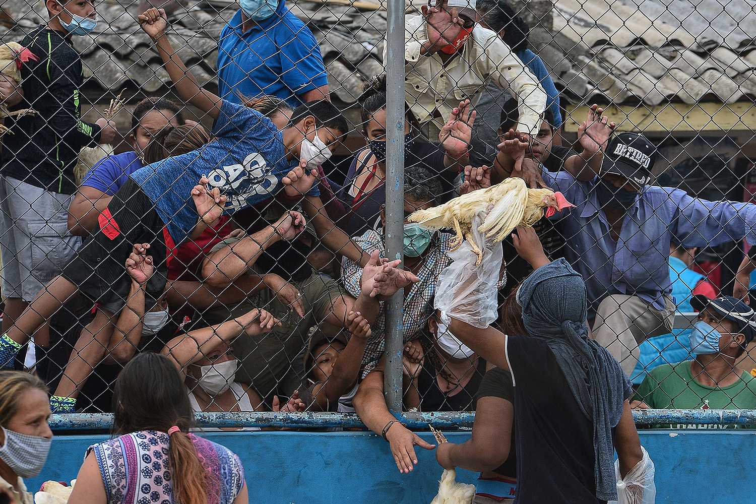 A crowd of people reach out for hens distributed by Wilfredo Mendez, a Honduran presidential pre-candidate for the Libre Party, in Tegucigalpa on May 7. ORLANDO SIERRA/AFP via Getty Images