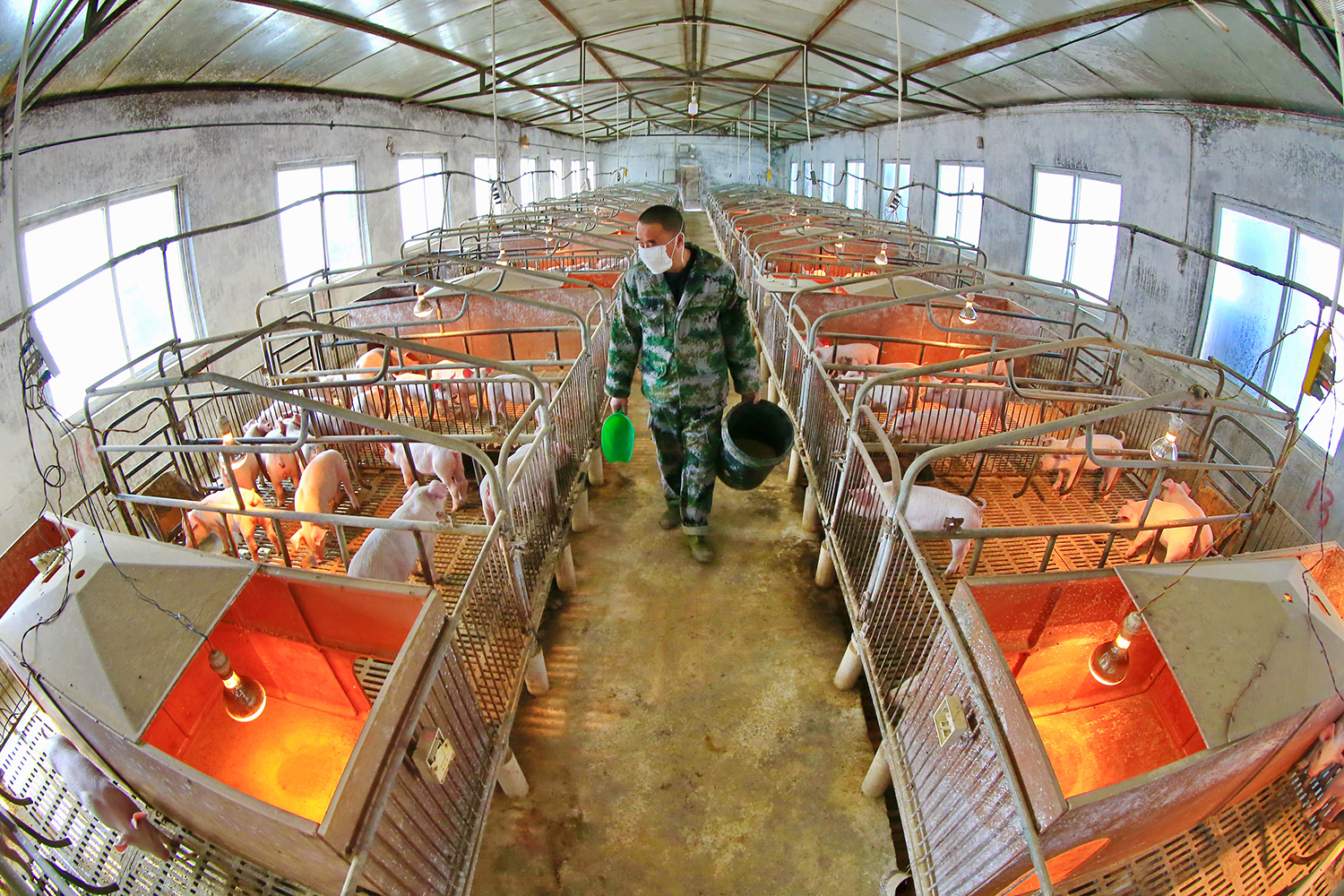 China's Farms Are Petri Dishes of Antibiotic Resistance