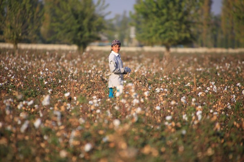 A cotton grower looks on as she works in a cotton plantation.