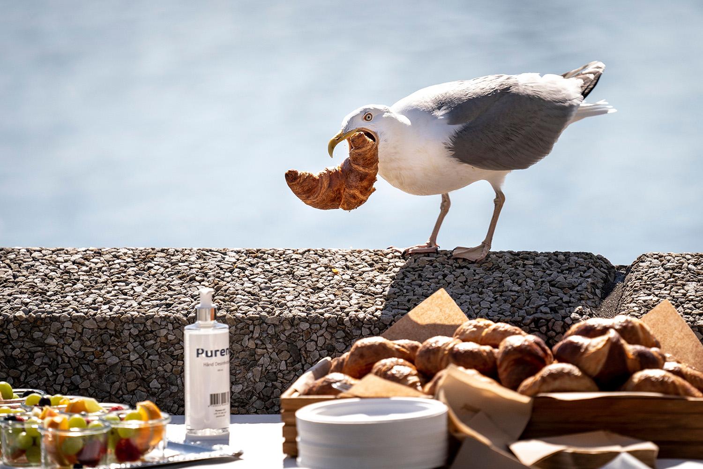 A seagull snatches a croissant from a breakfast buffet in Copenhagen, Denmark, on June 25. MADS CLAUS RASMUSSEN/Ritzau Scanpix/AFP via Getty Images