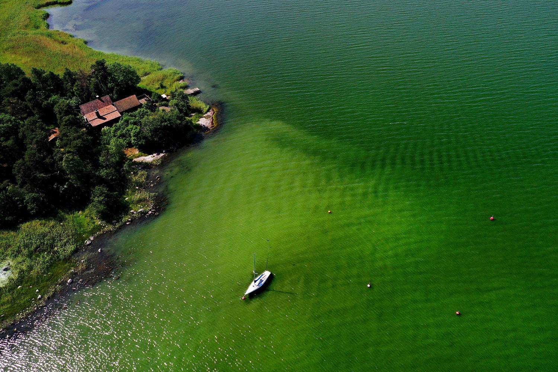 Toxic blue-green algae bloom on the Baltic Sea coast at Tyreso near Stockholm, Sweden, on June 25. PONTUS LUNDAHL/TT News Agency/AFP via Getty Images