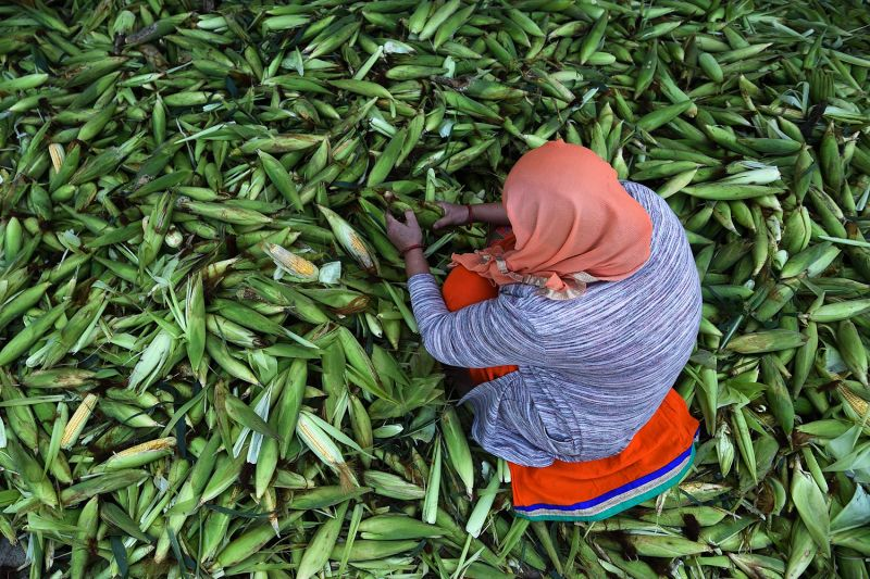 A woman selects corn for the market during the government-imposed nationwide lockdown in Kathmandu, Nepal, on May 7.