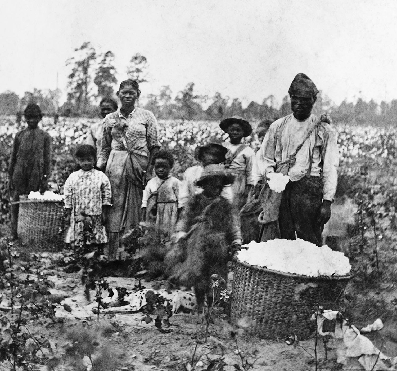 A family of enslaved people picks cotton in the fields near Savannah, Georgia, circa 1860.
