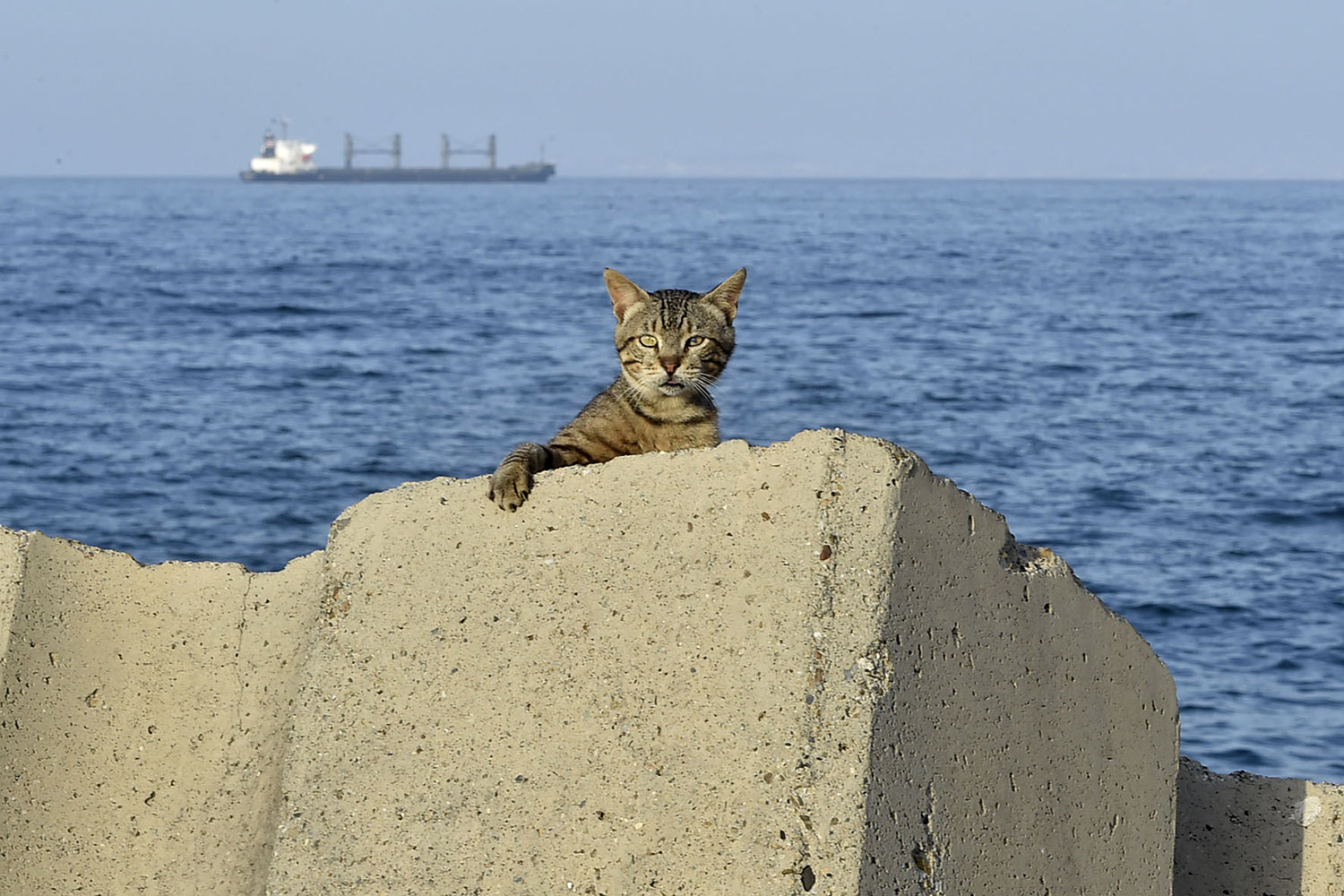 A cat sits at a seafront promenade in the Bab el-Oued district of Algeria's capital Algiers on June 29. RYAD KRAMDI/AFP via Getty Images
