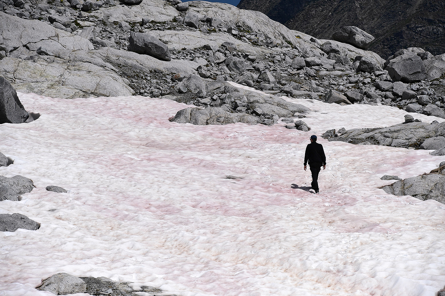 A man walks on pink-colored snow, reportedly due to the presence of algae, at the Presena glacier in the Italian Alps on July 4. MIGUEL MEDINA/AFP via Getty Images
