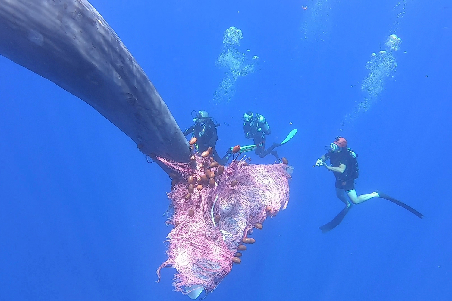 Italian coast guard divers work to free a sperm whale caught in a fishing net north of the Sicilian Aeolian Islands in Italy on July 19 in this still image taken from a video. Carmelo Isgro/MuMa Museo del Mare di Milazzo/Via Reuters