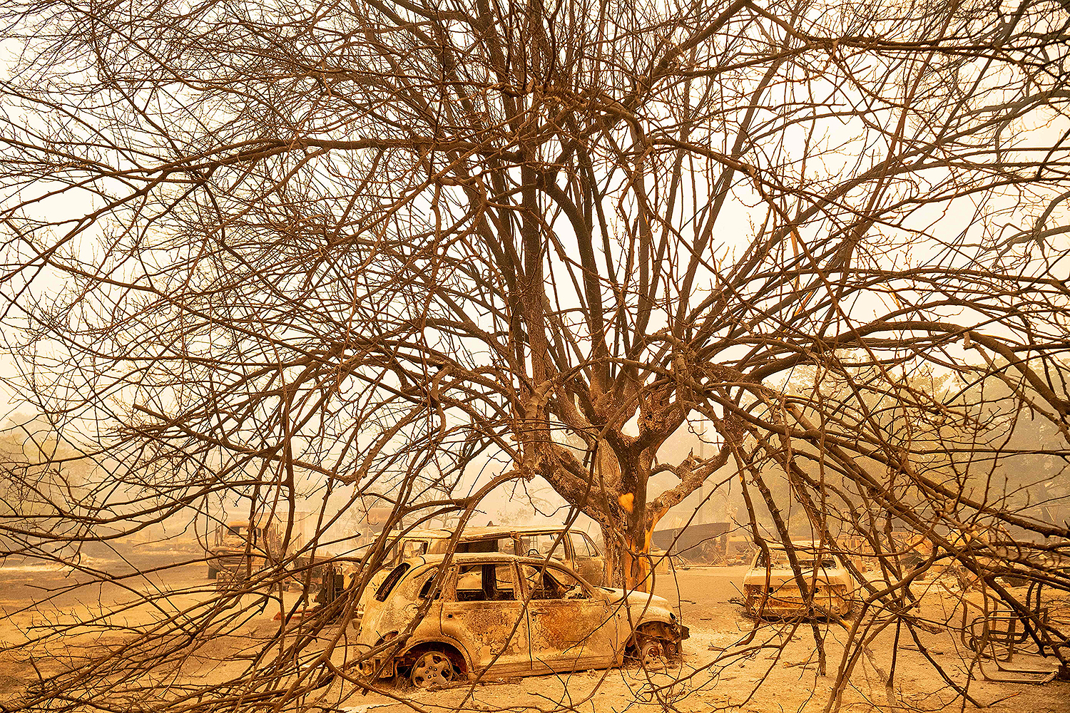 Burned-out vehicles sit under a burned tree at a residence in Vacaville, California, during the LNU Lightning Complex fire on Aug. 19. Dozens of fast-moving fires, many triggered by lightning strikes during an extreme heat wave, spread across the north and center of the state in August, threatening homes and causing the evacuation of thousands of people. JOSH EDELSON/AFP via Getty Images