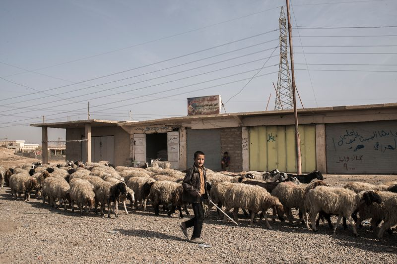 A boy herds sheep in the Nineveh Plains of northern Iraq on Nov. 11, 2016.