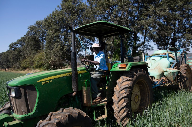 A farm worker fertilizes wheat at Ivordale Farm outside Harare, Zimbabwe, on Aug. 1, 2018.