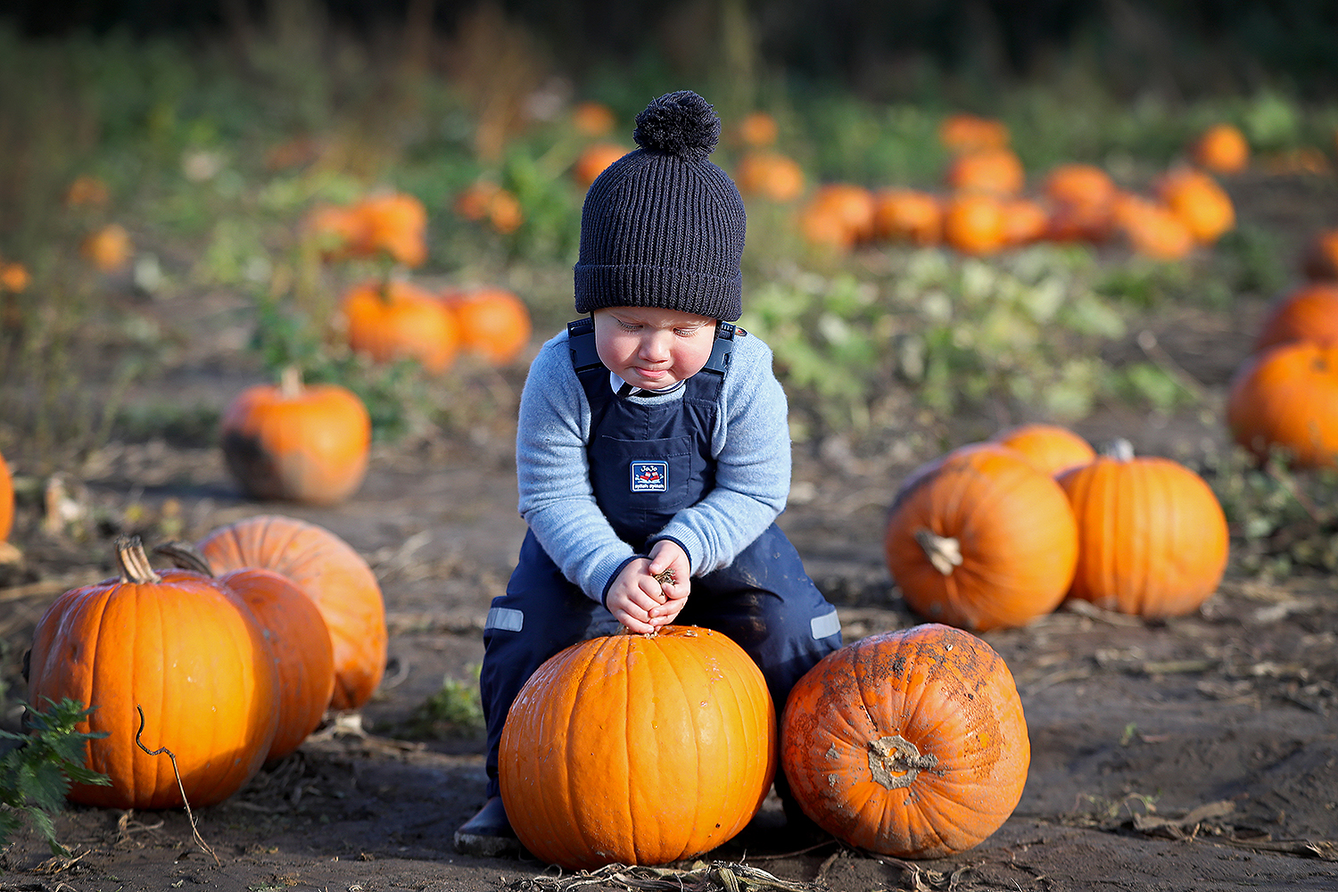 Theo Jackson, the photographer's son, picks pumpkins for Halloween at Garson Farm PYO in London on Oct. 2. Chris Jackson/Getty Images