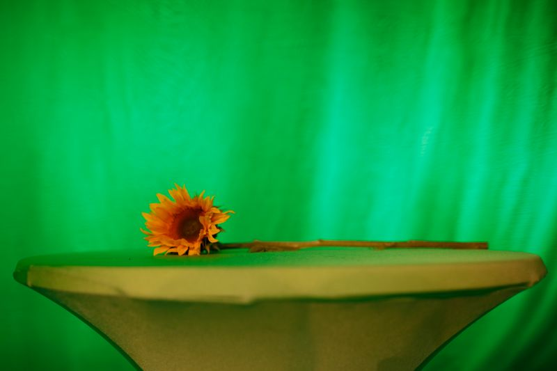 A sunflower lies on a table at the venue of the electoral party of German green party Buendnis 90 Die Gruenen in Berlin, on Sept. 23, 2013.