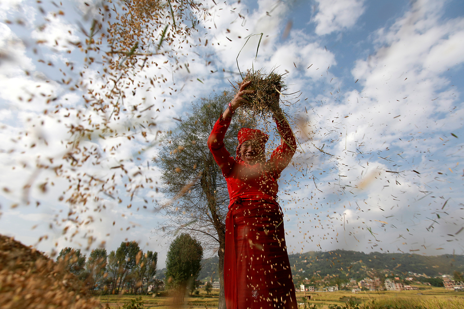 A farmer harvests rice at a field in Bhaktapur, Nepal, on World Food Day, Oct. 16. Navesh Chitrakar/REUTERS