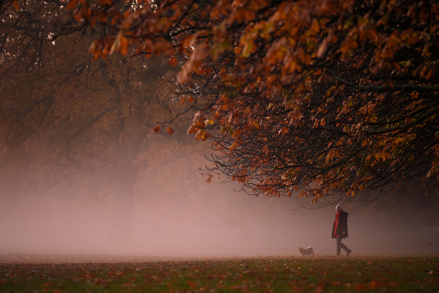 A person walks their dog in the morning mist at sunrise in Greenwich Park in south London on Nov. 9. DANIEL LEAL-OLIVAS/AFP via Getty Images