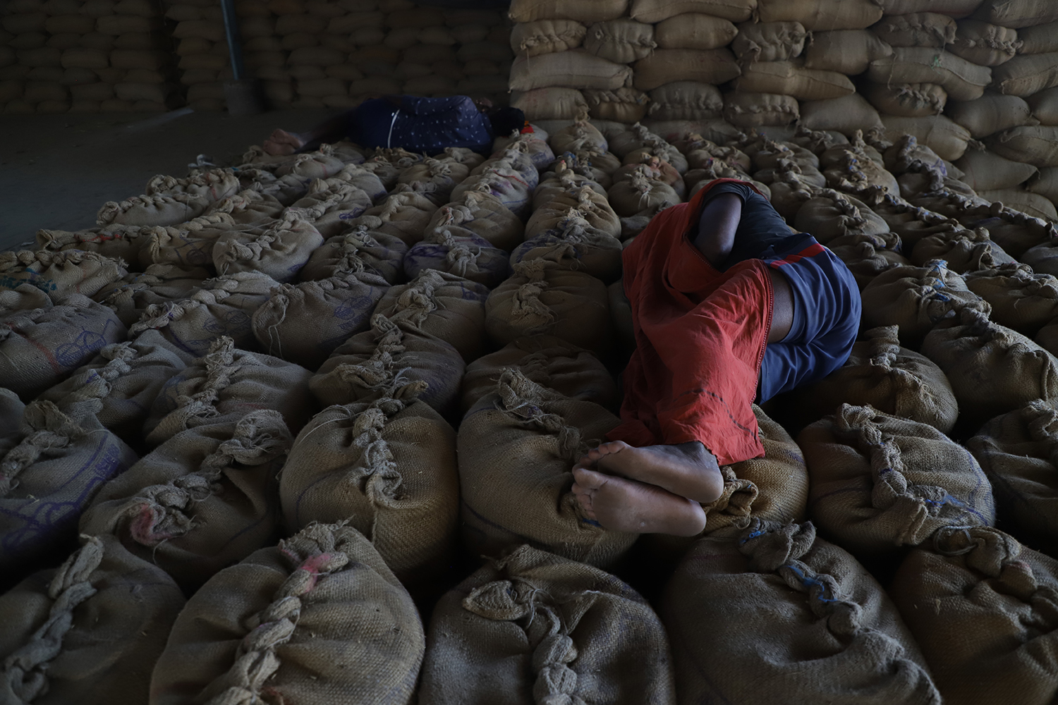 Laborers rest on bags of shelled corn at the Khanna market in Punjab on Oct. 3.
