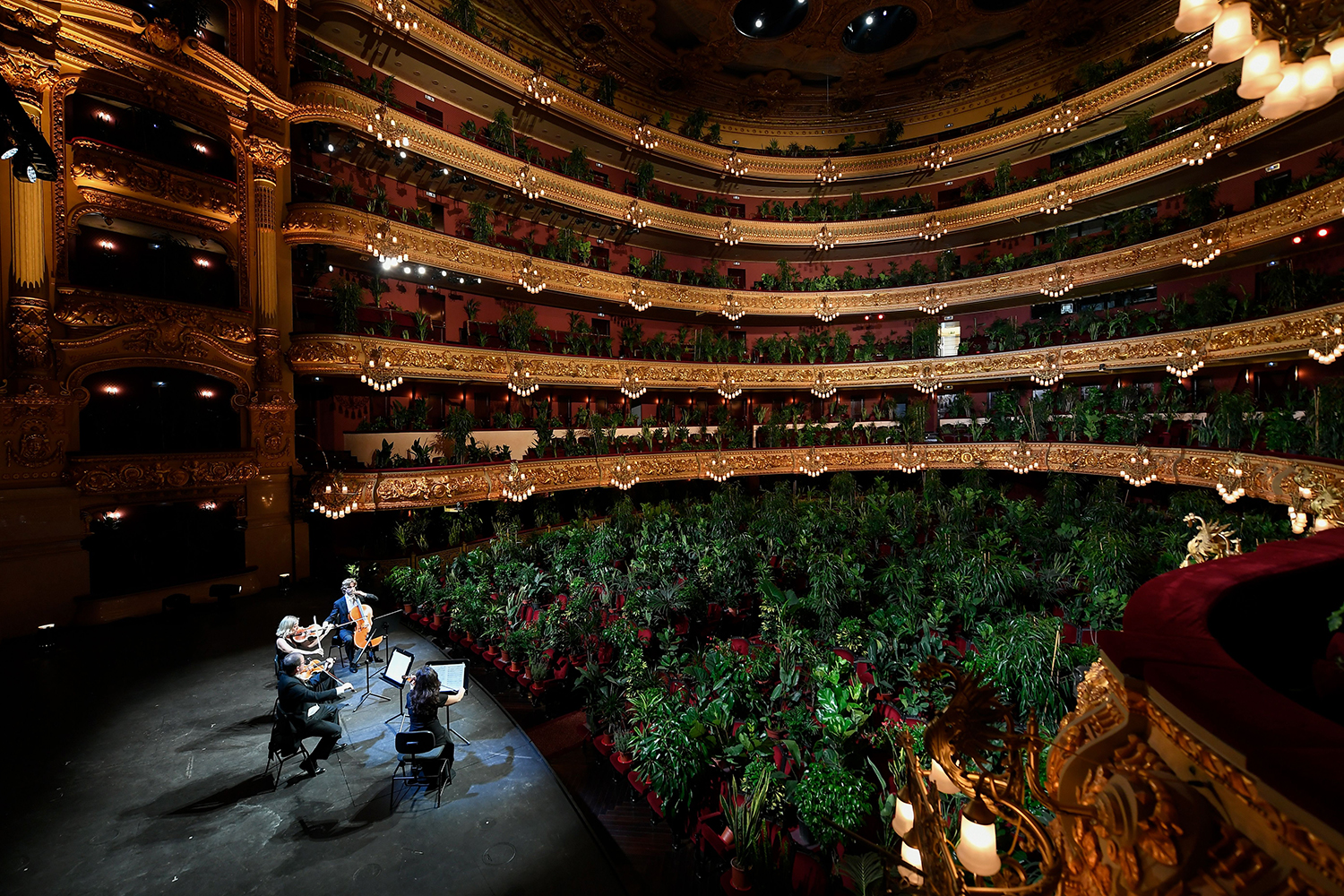 The perfect audience. The UceLi Quartet performs for an audience of plants during a concert at the Gran Teatre del Liceu in Barcelona on June 22. LLUIS GENE/AFP via Getty Images