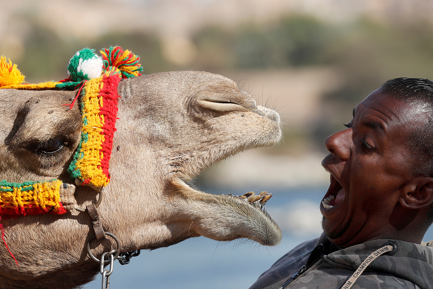 These faces. Hossam Nasser, 32, plays with his camel Anter on the west bank of the Nile river in Aswan, Egypt, on Feb. 19. Amr Abdallah Dalsh/REUTERS