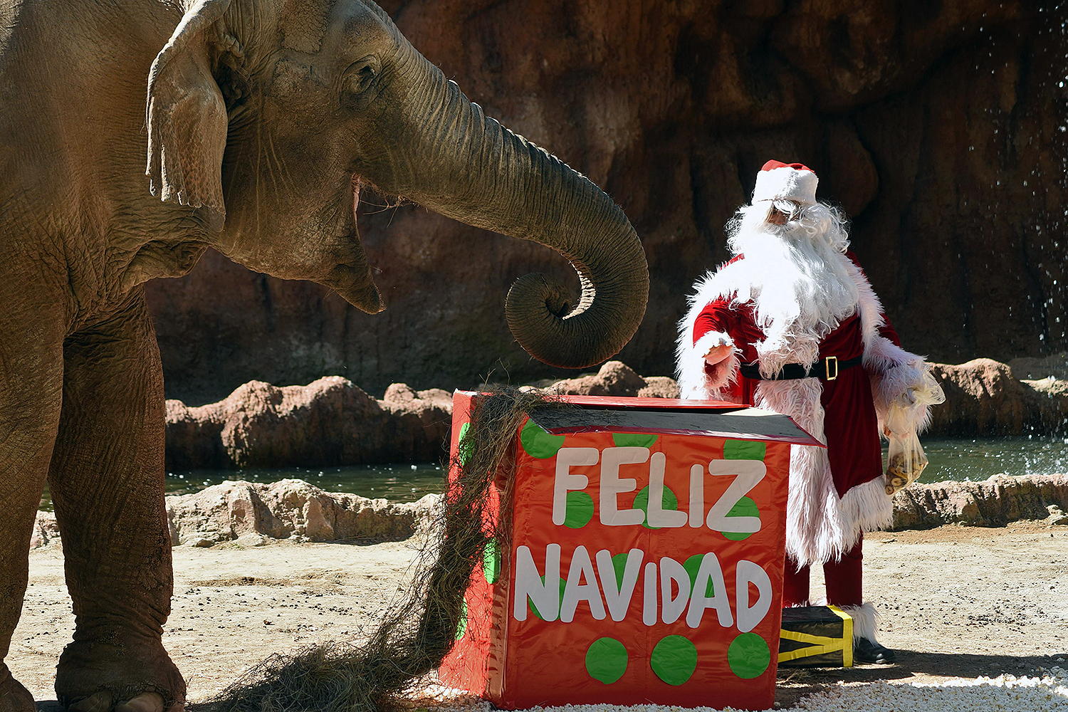 Being on Santa's Nice List. Elephant Trompita tries to open a gift brought by a visitor as a caretaker dressed as Santa Claus looks on as part of a Christmas tradition at La Aurora Zoo in Guatemala City on Dec. 18. ORLANDO  ESTRADA/AFP via Getty Images