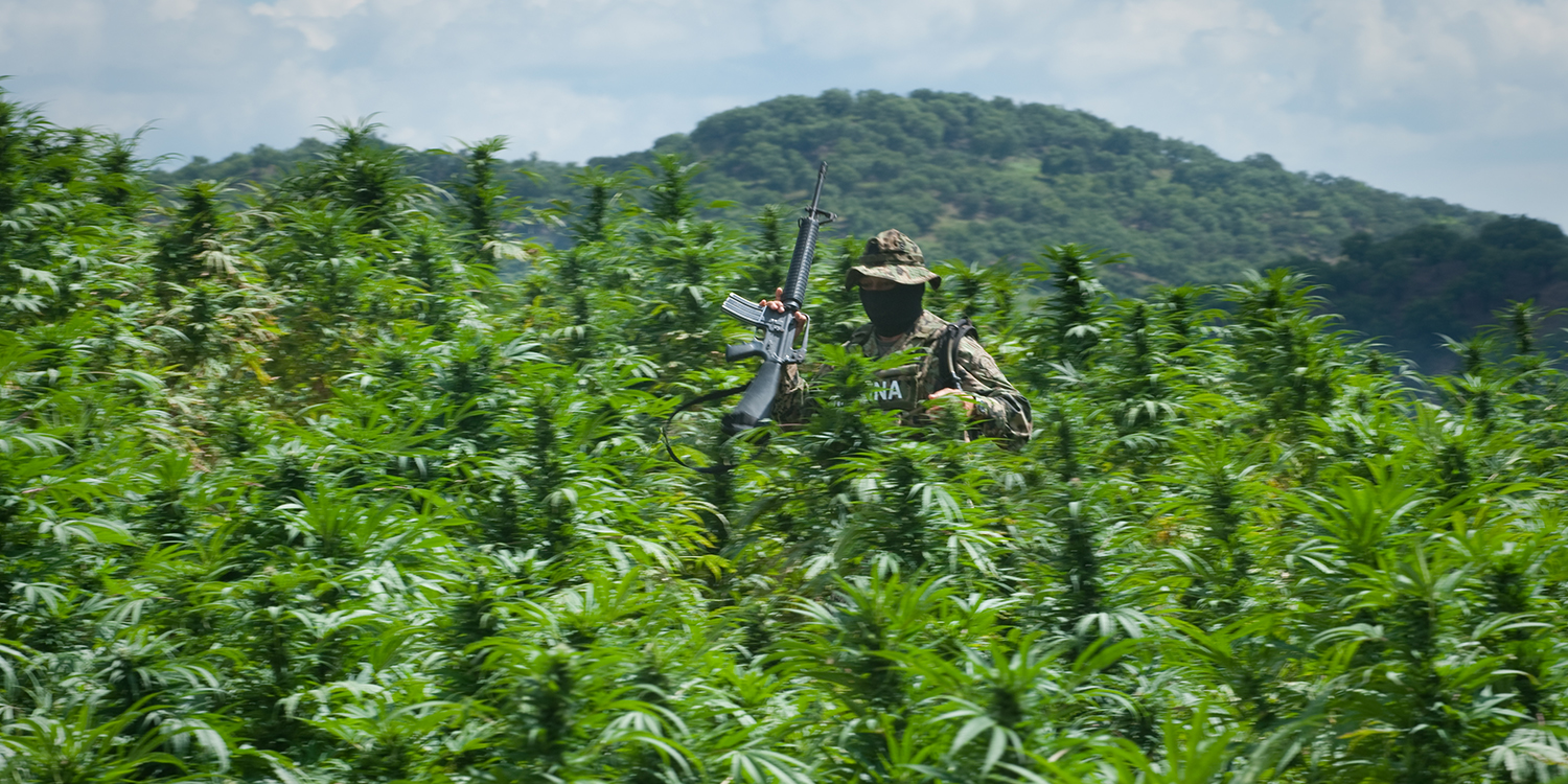 A Mexican Marine walks through a marijuana field during a mission to destroy the crop in the remote mountains of Sinaloa on Sept. 9, 2009.
