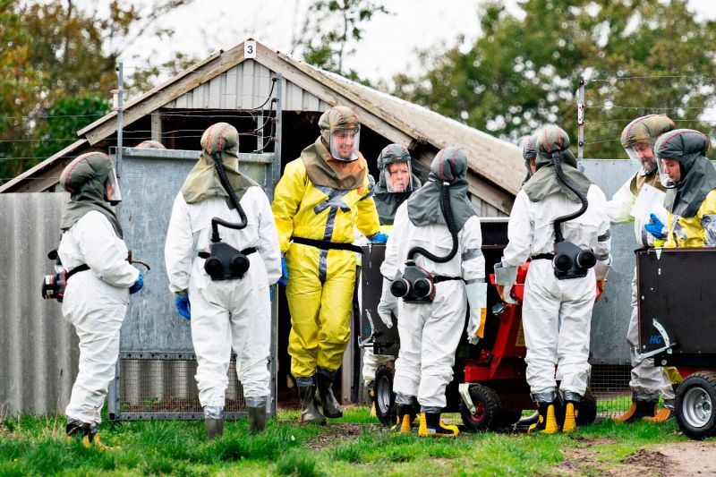Employees from the Danish Veterinary and Food Administration and the Danish Emergency Management Agency work to cull minks after a new strain of the coronavirus was discovered in mink farms in Gjol, Denmark, on Oct. 8.