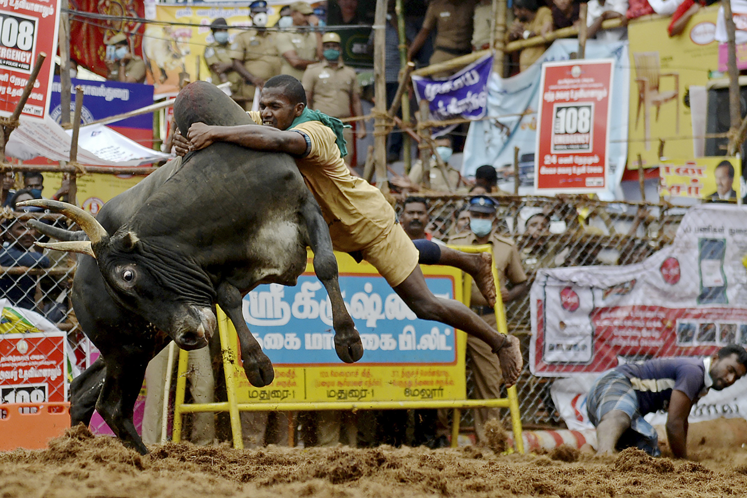 A participant tries to control a bull during an annual bull-taming festival in Palamedu, India, on the outskirts of Madurai, on Jan. 15. ARUN SANKAR/AFP via Getty Images
