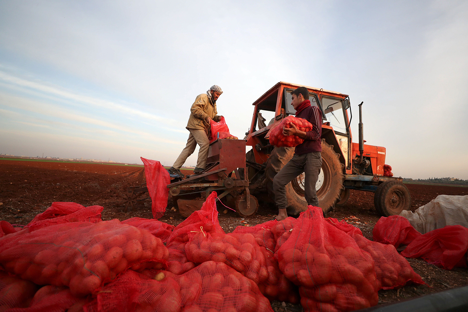 A Syrian farmer fills a tractor with potatoes before planting begins near the town of Binnish in Syria's northwestern Idlib province on Jan. 12.