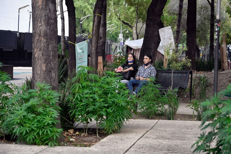 People sit on a bench among marijuana plants outside the Senate building in Mexico City on Sept. 30, 2020.
