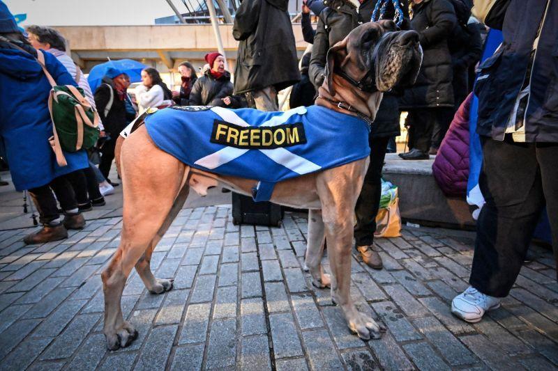 A dog wearing a Scottish flag.